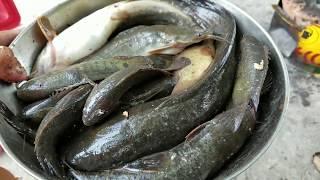 Những chổ câu hoài không hết cá l Cảnh đẹp khó kiếm ở Sài Gòn