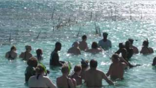 preview picture of video 'Kent and Judy Francis from American Travel Bureau swim with the Stingrays in Antigua St. Johns'