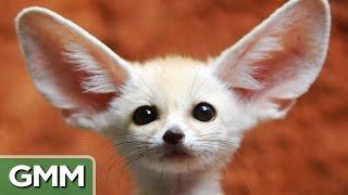 6 Exotic But Legal Pets