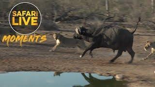 Incredible Nkuhumas on the Hunt