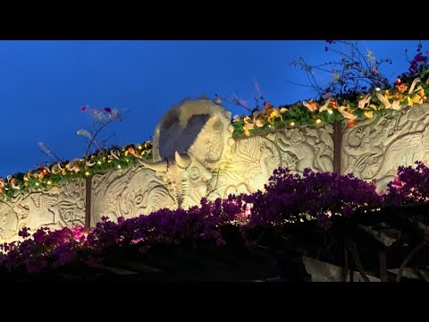 Early Night Live: Holidays at Disney's Animal Kingdom