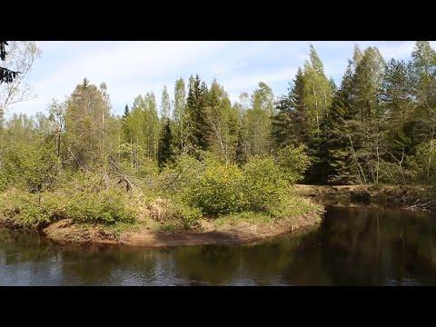 Линдуловская роща и река Рощинка. Май