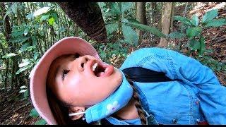 Uống nước cây rừng trong rừng sâu - Hương vị đồng quê - Bến Tre - Miền Tây