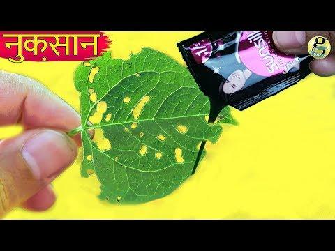 मेरा पौधा कौन खा रहा है ! PLANT PESTS  | Gardening Tips