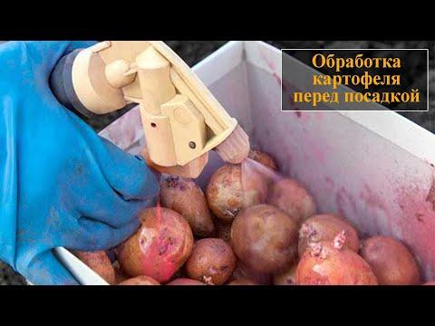 Обработка картофеля перед посадкой