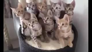 Güzel ve Komik Kedi Video
