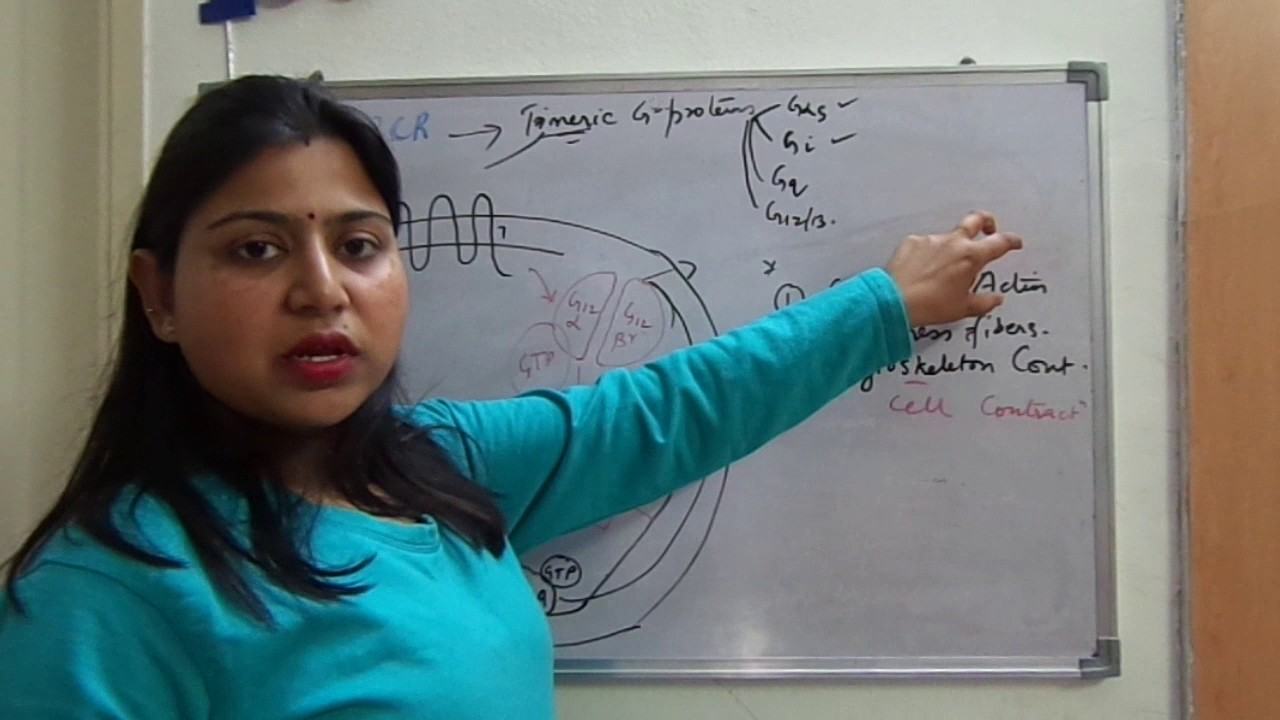 G-Protein Coupled Receptor- Part 2.