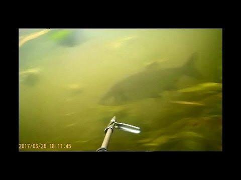 подводная охота Удачный поиск
