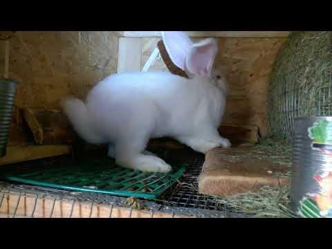 Растут крольчата,один день из жизни в крольчатнике.