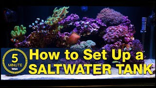 Saltwater aquarium setup - A simple, easy guide in 5-minute steps