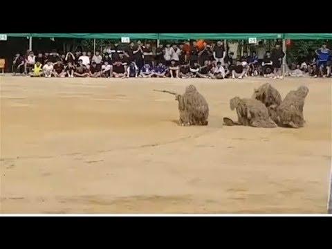 韓國PUBG接力賽