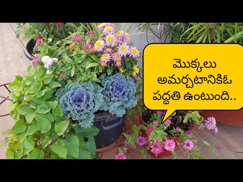 ఒకే కుండీలో రకరకాల మొక్కలు  అందంగా అమర్చడం ఎలా??Container Gardening # thrillers,fillers spillers..