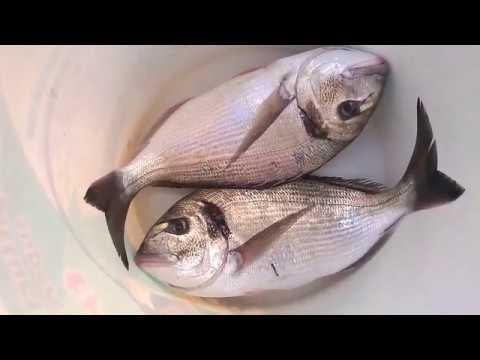 La pesca su una picca e una pertica nella Crimea