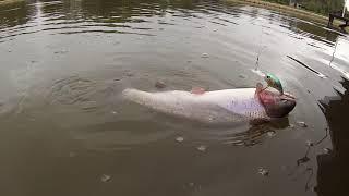 Платная рыбалка савельево 1 форум