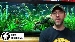 How to TAKE CARE of a PLANTED TANK: Lights, dosing fertilizers, Pressurized CO2,water changes