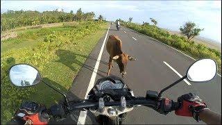Motorcycle Hits Cow!! || Yamaha Fz S