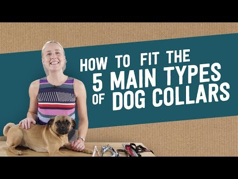 How To Fit The 5 Main Types Of Dog Collars