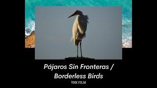 Pájaros Sin Fronteras / Borderless Birds
