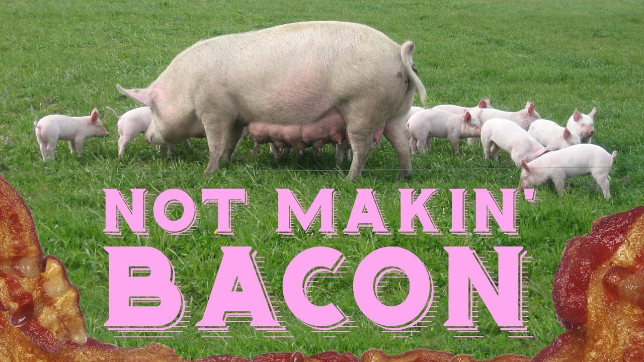 Global Bacon Shortage In 2013 thumbnail