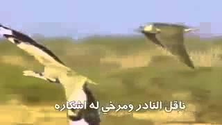 شيلة عشق القرانيس لشاعر خليفه سيف واداء جابر بن صبح تحميل MP3
