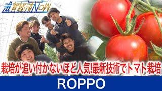 栽培が追い付かないほどの人気に!最新技術でトマトを栽培、若手男性6人の会社ROPPO(ロッポ)をご紹介!【滋賀経済NOW】2021年4月3日放送
