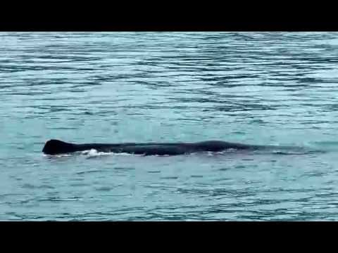 Kaikoura Whale Watching New Zealand compact