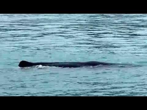 Kaikoura Whale Watching New Zealand compact