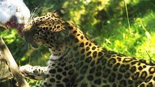Eläintarhan Ihmisiä, Osa 2: Mitä Eläimet Syövät?