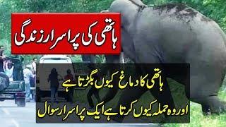 Life Of Elephant in Urdu - Amazing Jungle Animals - Purisrar Dunya Urdu Documentaries