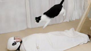 【花花与三猫】猫从高空蹦到主人胸口,主人:野猫disco?