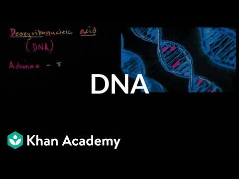 Biochemistry The Molecular Basis Of Life Pdf