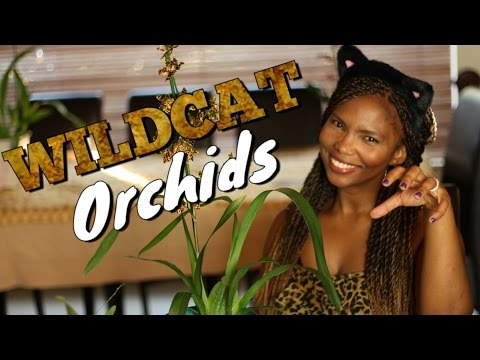 , title : 'How to grow Oncidium Wildcat orchids