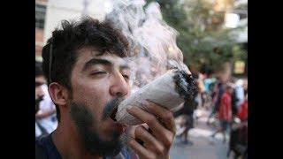 Легализация марихуаны в малых дозах. За и Против
