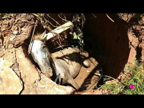 Égua cai em fossa em Alto Araguaia/MT