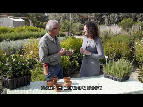 סרטון הסבר על גידול שתילים בבית