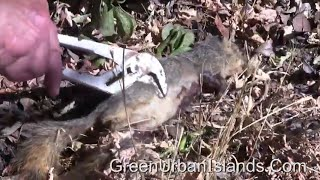 IEDs to kill invading rats and squirrels