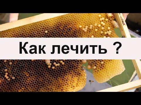Пасека #45 Гнилец или нет, но лечить надо - болезнь пчел Пасека Пчеловодство.