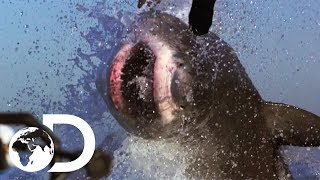 The Most Epic Shark Week Moments! | Shark Week's 50 Best Bites | SHARK WEEK 2018