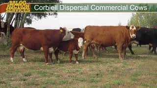 Corbiell Commercial Cows 2017