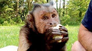 Monkey Tries Doughnut Peach