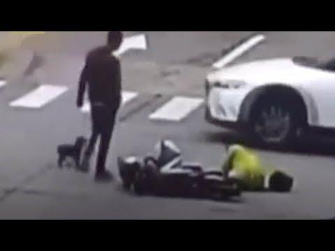 Отважная маленькая собачонка погналась за машиной, сбившей её хозяйку