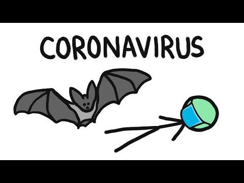 Proč netopýři přenášejí tolik nemocí?