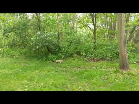 A quick 360 degree view of the camping area.
