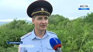 Более трех миллионов кустов конопли уничтожили в Приморье
