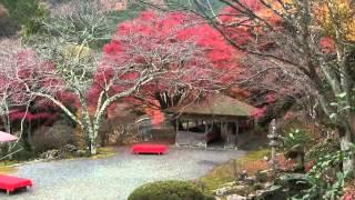【京都】1日100人しか入れない日本庭園「白龍園」