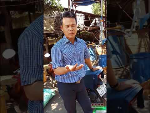 Phân khoáng Silic - Nếm phân - Ông Lê Đăng Khôi