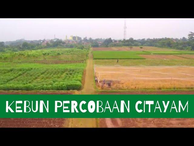 Profil Kebun Percobaan (KP) Citayam
