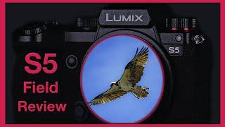 Best Hybrid Full Frame? Panasonic S5 Field Review