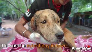 Dog's massive wound shrinks before your very eyes.