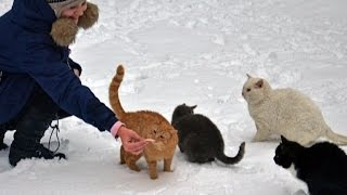 Как и чем мы можем помочь бездомным и потерянным животным в мороз?